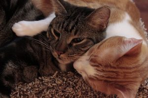 Katzen Sprüche